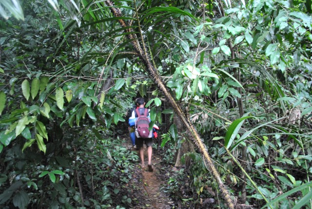 Last stretch trek trail inside thick forest (half KM ascend)