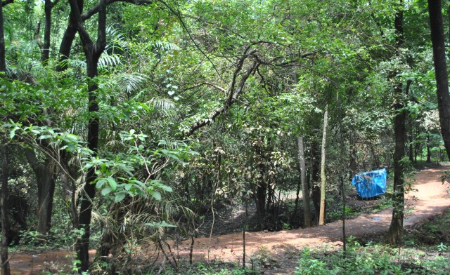 Dudhsagar falls trek mud route