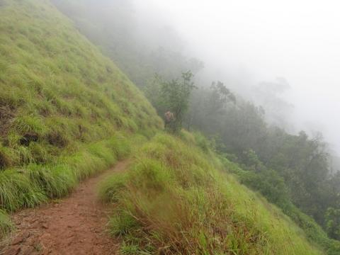 Grassy trek trail