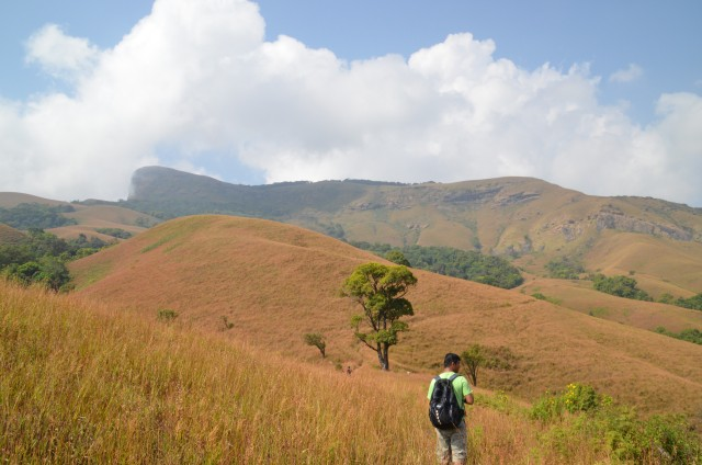 Kudremukh trek route : This is another land mark ontimara which means alone tree but now you can see couple of small trees so that big tree is no more alone and behind you can see Kudremukh peak