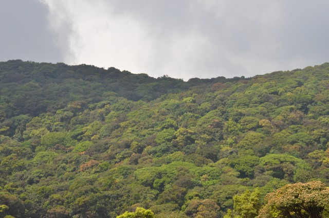 Shola forest near to Kudremukh peak