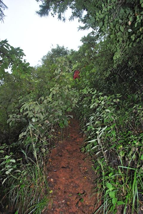 Initial Mullayanagiri trek route