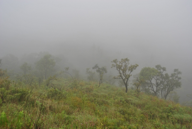 Mist covered Mullayanagiri hills after 1kms from starting point