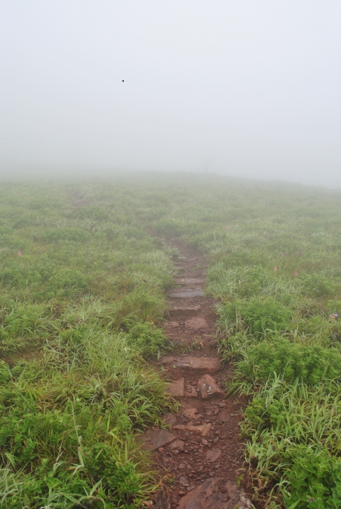 Misty mullayanagiri trek trail route