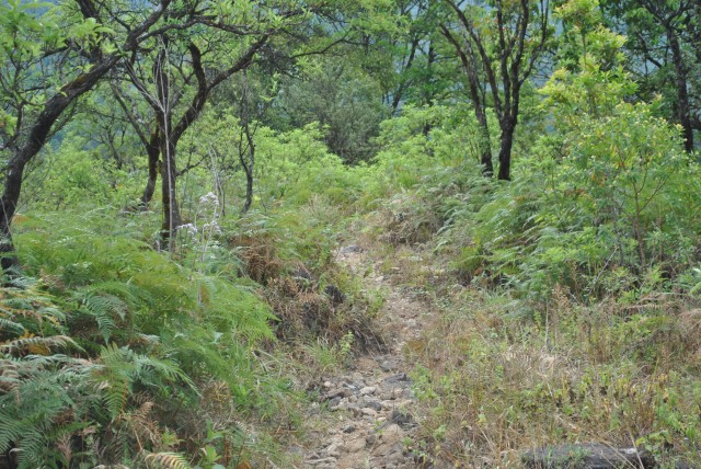Visible trek trail  (From Kigga to Narasimha Parvatha Peak)