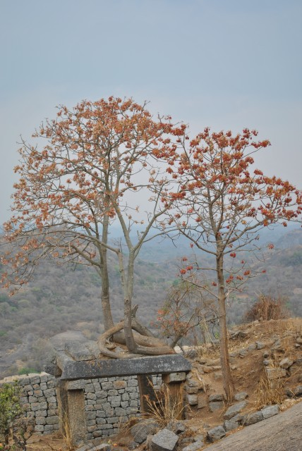 Tree on top of Kallu Chappara