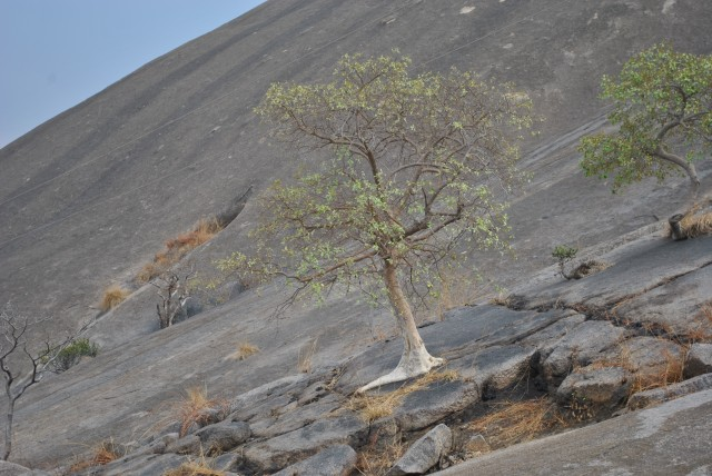 tree on rock mountain